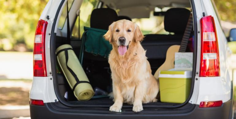 10 consejos para viajar con tu perro en el carro y evitar contratiempos